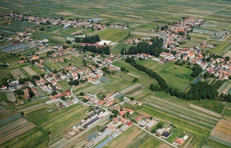 Vidovec