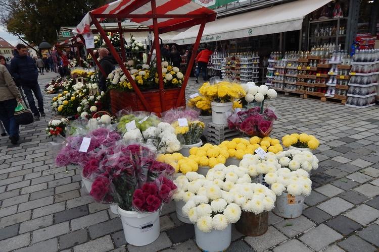 cvijeće 1