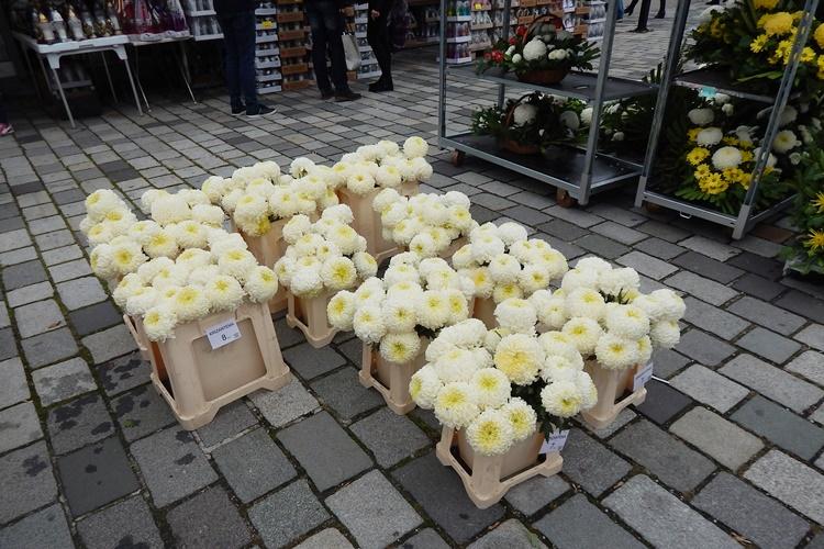 cvijeće 3