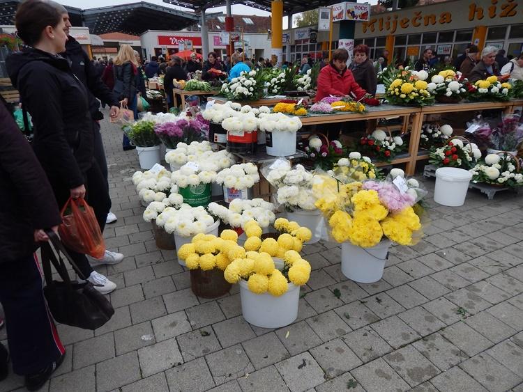 cvijeće 6
