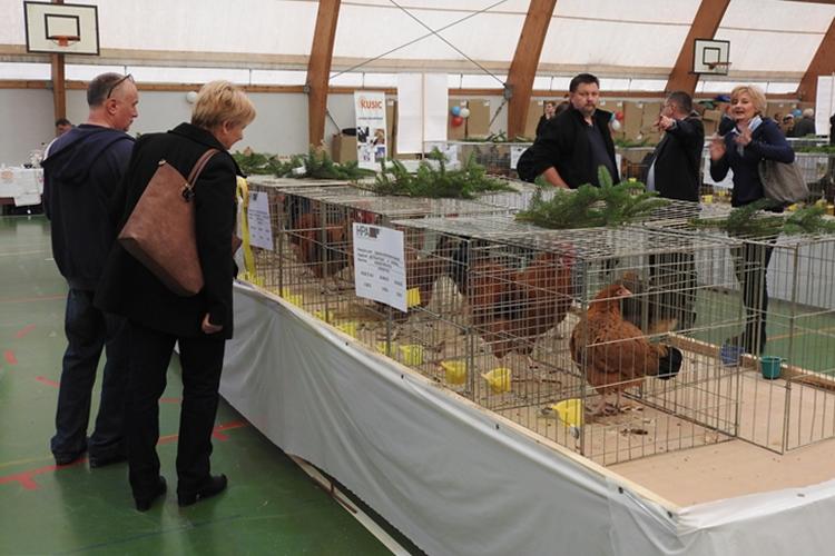 izložba izvornih pasmina peradi