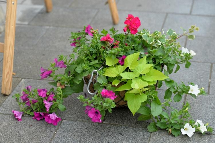 cvjetne 3