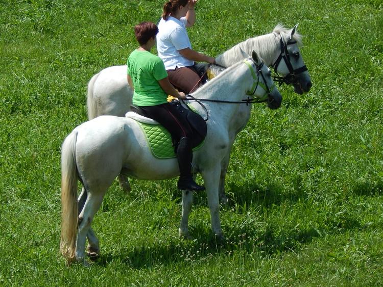 konji 10
