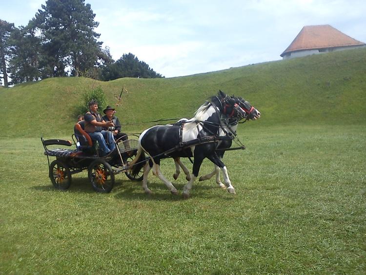 konji 11