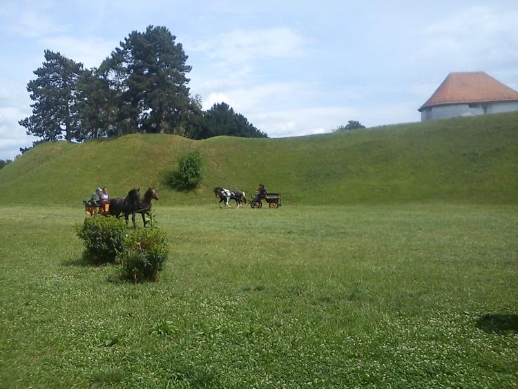 konji 12