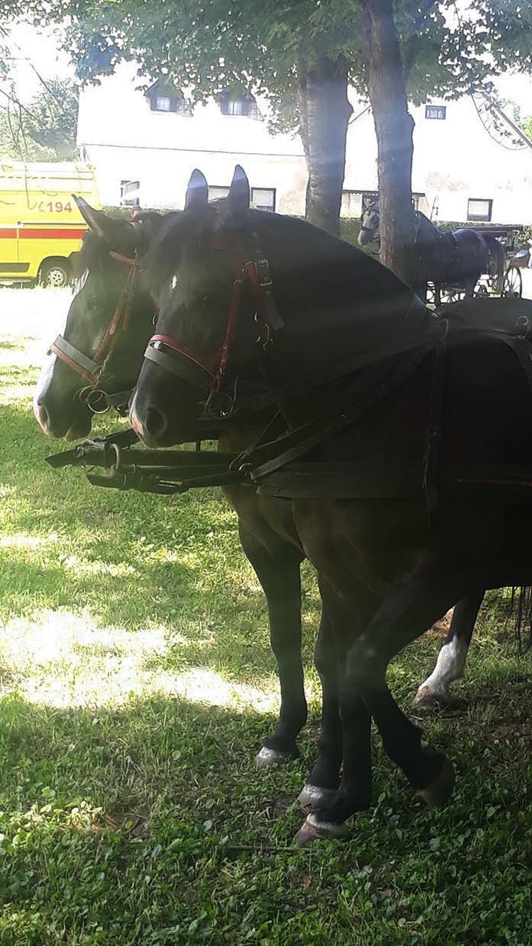 petrijanec konji 7
