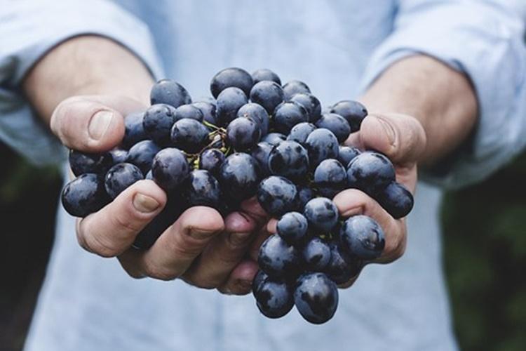 grozdje 1