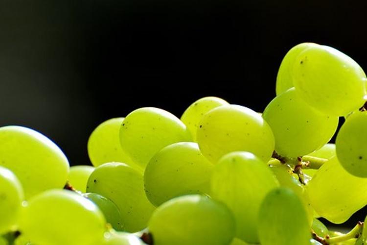 grozdje 2