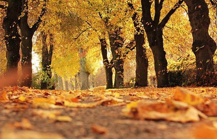 jesen 1