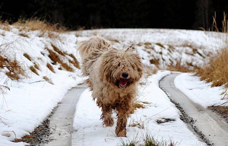 pas zima snijeg