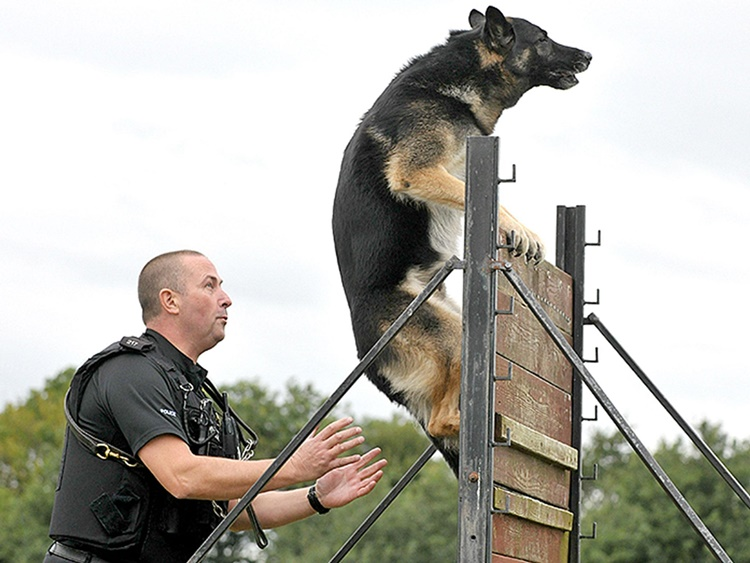 police-dog policija pas