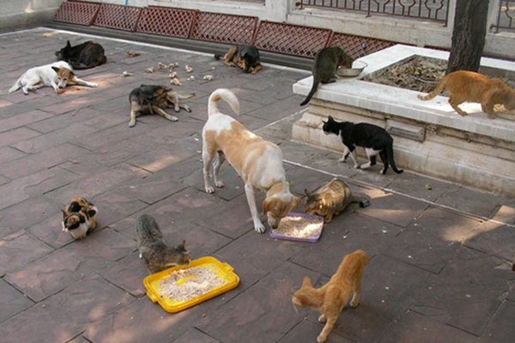 dogs-feral-cats