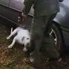 zlostavljanje psa