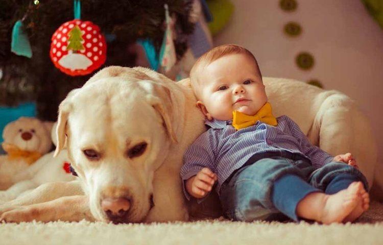 dog-crawling-baby