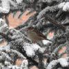 snijeg ptica zima
