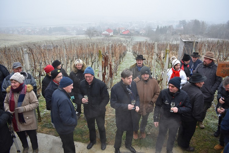 vincekovo vinica004