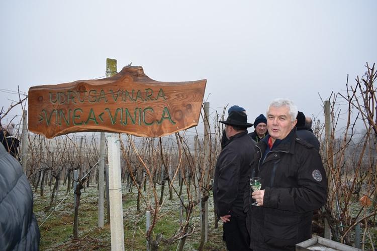 vincekovo vinica009