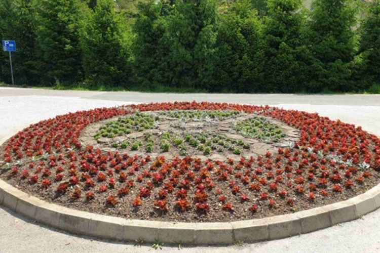 bednja cvijece 1
