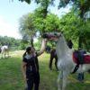 susret konjanika cestica6