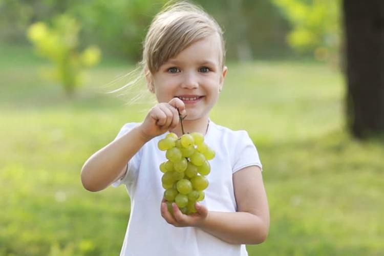 grozdje dijete jesen