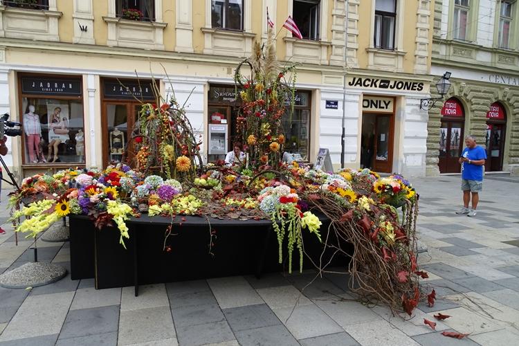 izlozba cvijeca korzo (13)