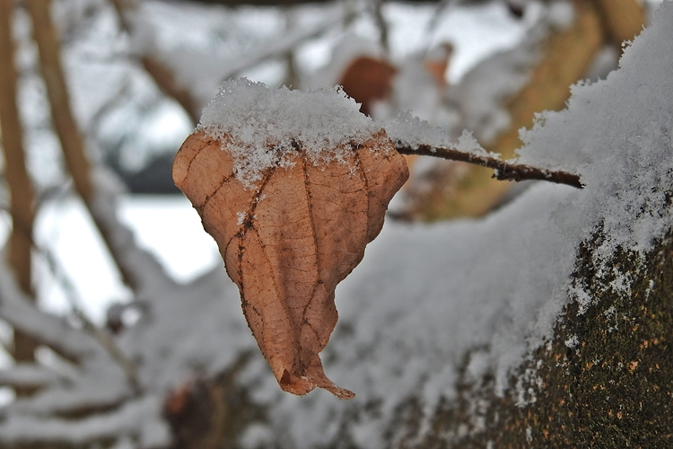 varazdin zima 22