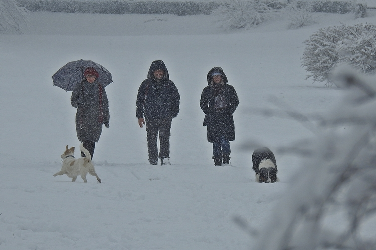 varazdin zima 46