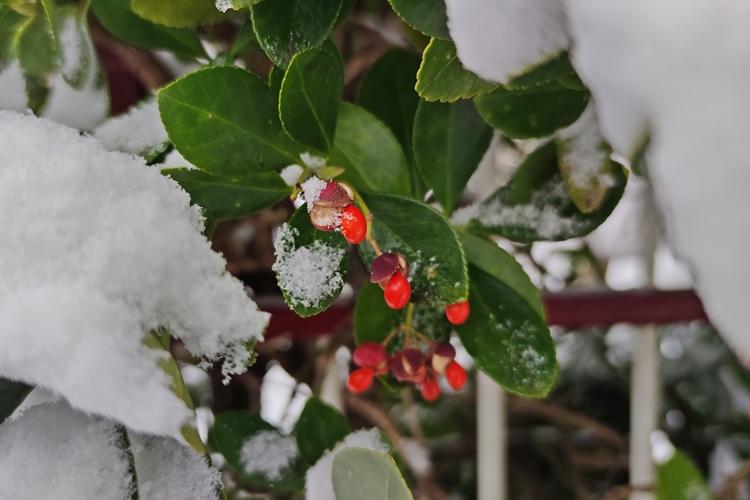 varazdin zima 48
