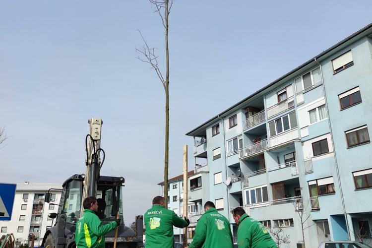 vzž-drvored (2)